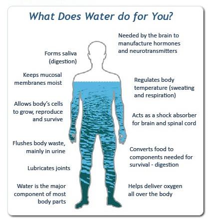 funcțiile apei -foodieopedia