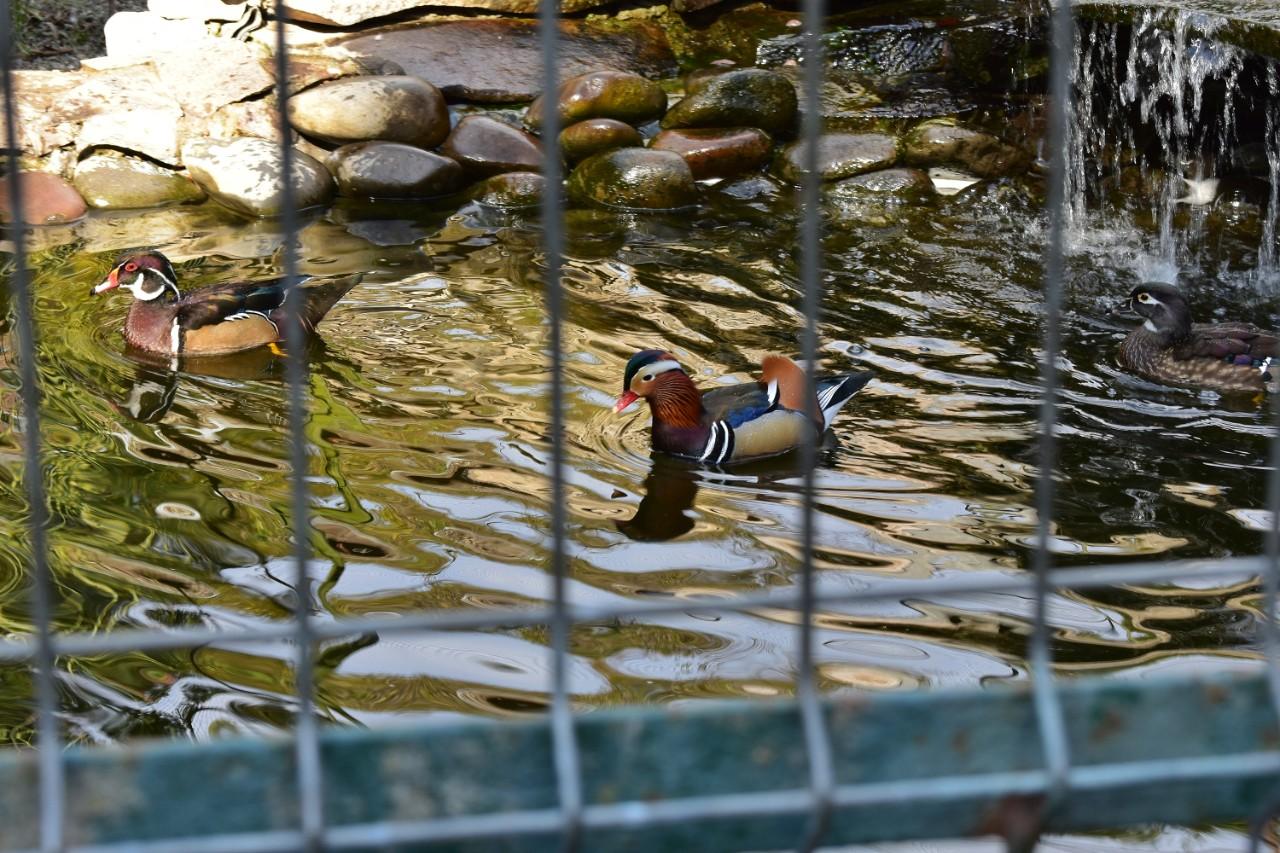 1. gradina zoologica Targu Mures